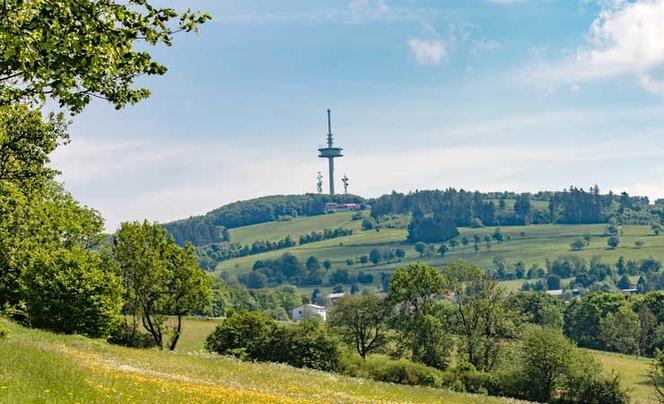 Sommerlandschaft mit Bäumen, grünen Wiesen und Hecken, im Hintergrund der Hoherodskopf